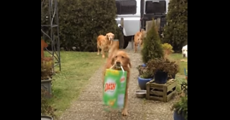 video Retriever helping with house work