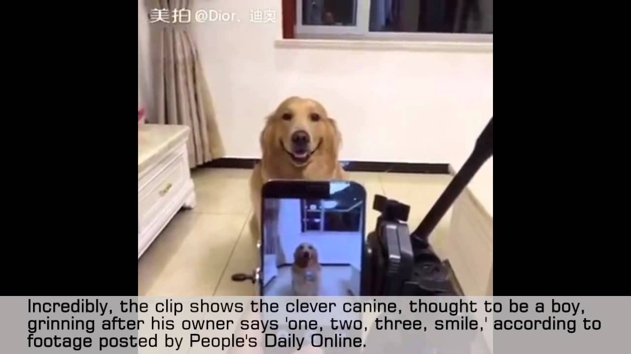 Video This Retriever Smiles For The Camera Doggie Outpost
