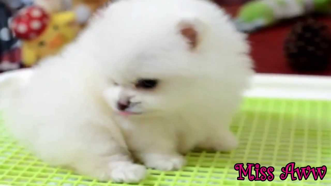 Video Fluffy Puppy Exploring His World