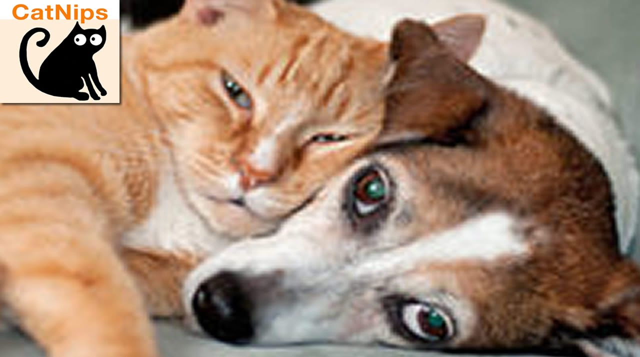 video of cat tries to wake up dog