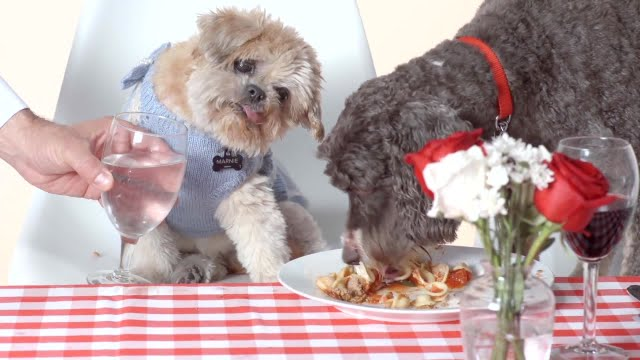video Marnie the rescue dog and friend enjoy gourmet meal