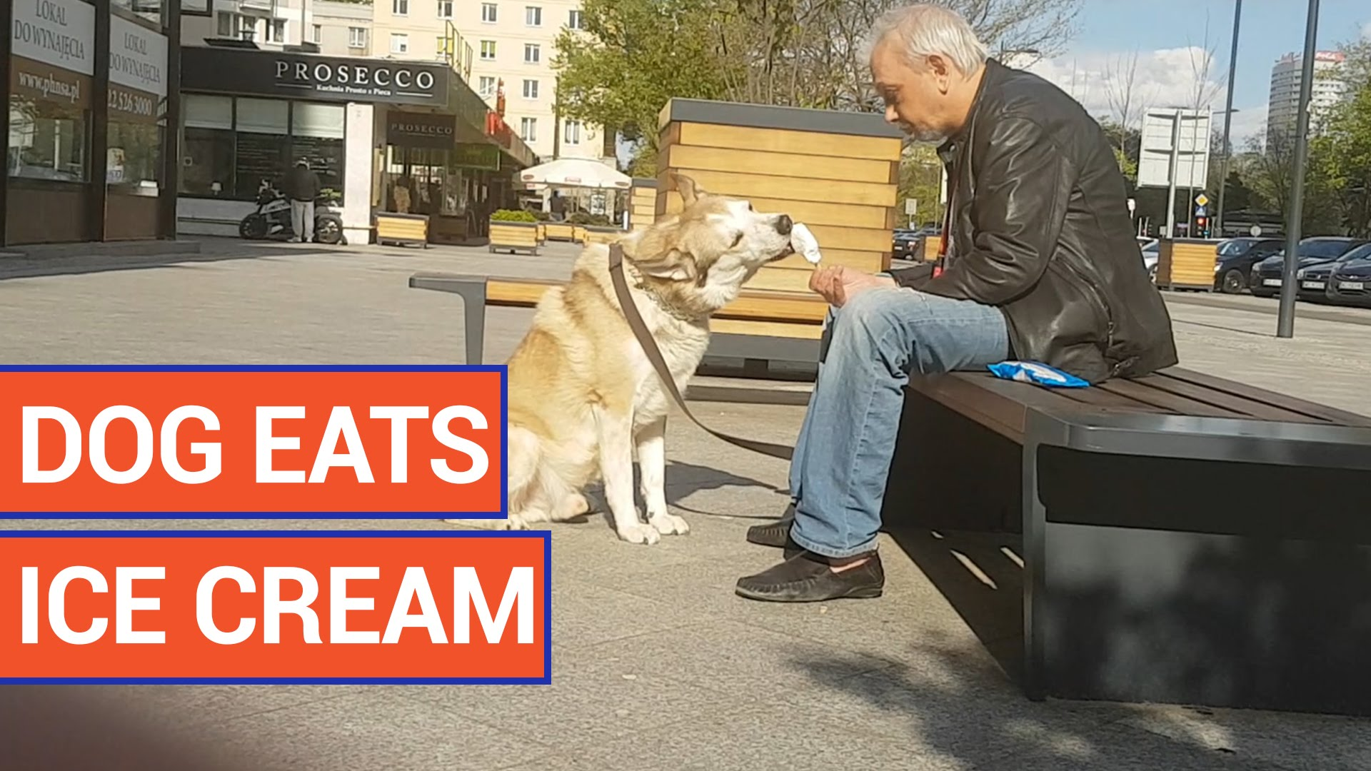 video of a kind man sharing ice cream with dog