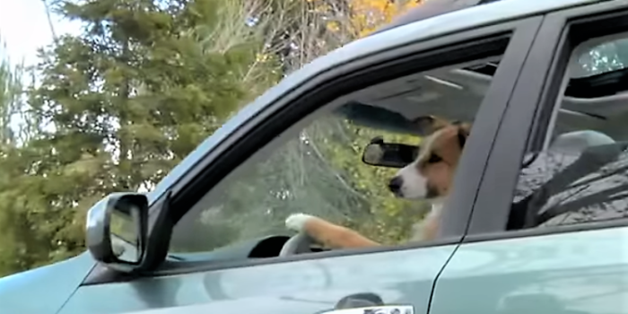 video Subaru commercial dogs camping