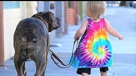 toddlers walking dogs