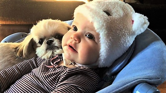 video shih tzu Abba relaxing with baby