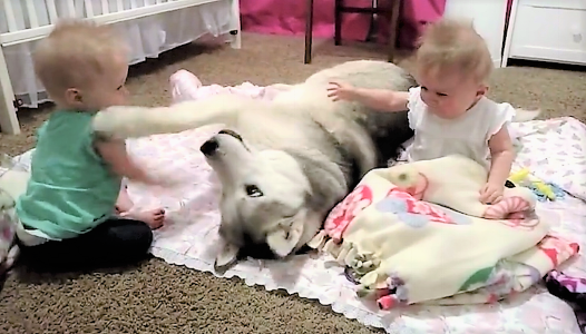 video dogs playing with babies gently