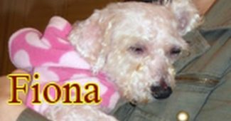 Fiona the rescue dog can see after her eye surgery