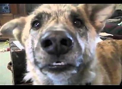 video of talking dog Clark G.