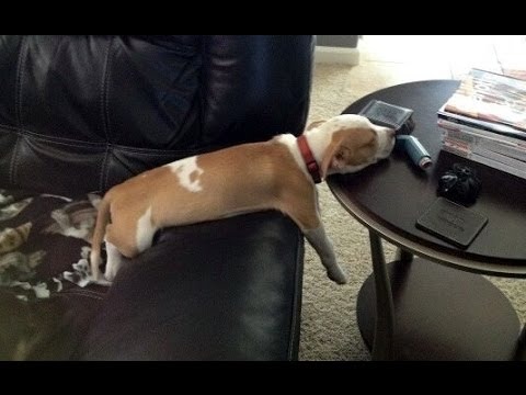 These dogs sleep in the weirdest positions