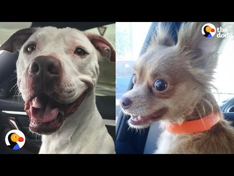 video of shelter dogs finding forever home
