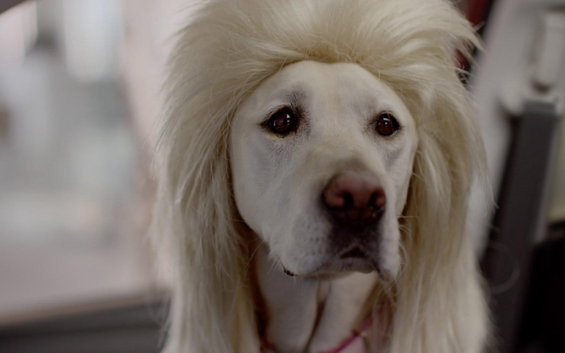 Subaru commercial Mrs. Barkley has a bad hair day