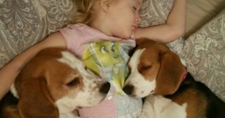 little girl and her dogs do not want to get up