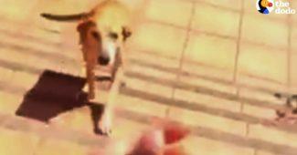 stray dog found new family