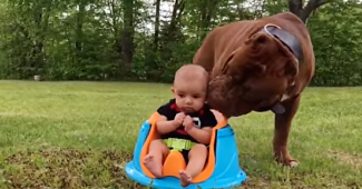 video Big dog kissing baby