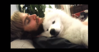 video Samoyed napping with dad