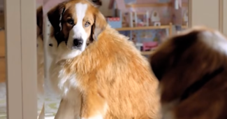 video funny Superbowl dog commercial by Volkswagon