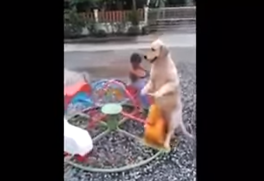 video dog riding merry go round