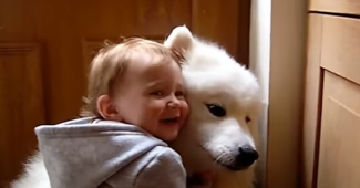 video Samoyeds making children laugh