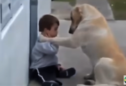 video mama dog reaches out to lonely little boy