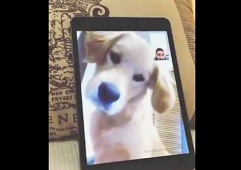 video puppy having facetime with dad