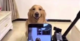 video retriever smiles on cue