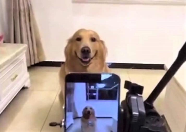 video retriever smiles on cue
