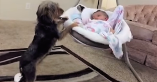 Loving dog rocking baby to sleep