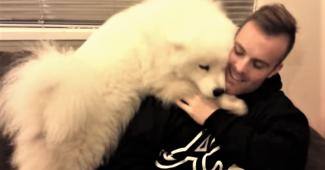 video Samoyed hugging man