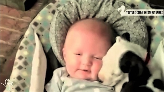 video puppies napping with babies