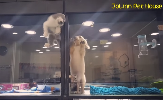 video kitten climbs wall to be with puppy friend