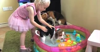 Laura gives Beagle puppy a bath
