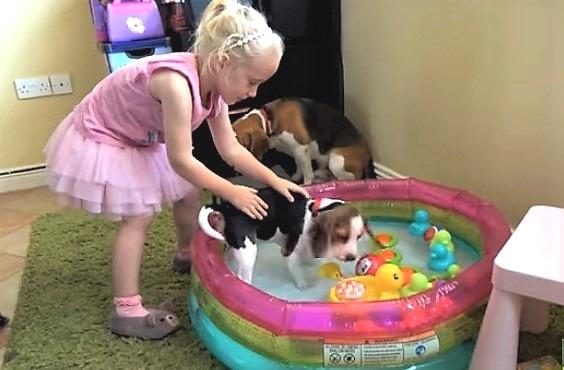 Laura gives Beagle puppy a bath