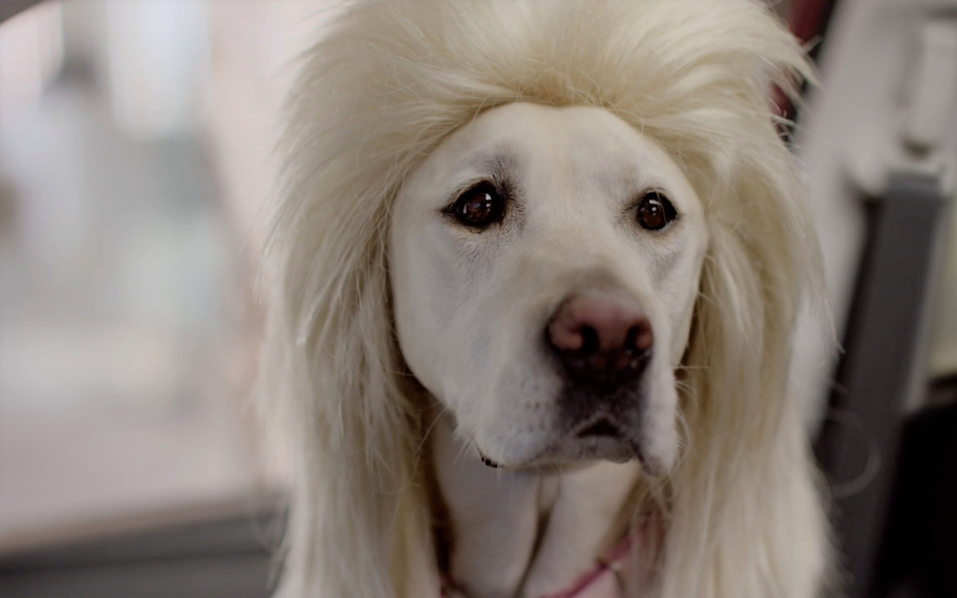 video Subaru commercial bad hair day