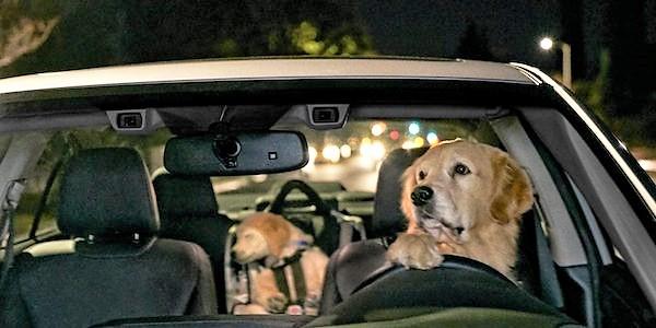 Subaru commercial puppy falls asleep in car