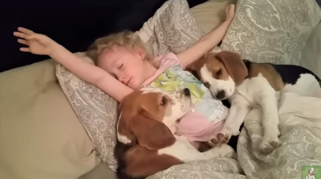 video little girl and her dogs do not want to get up