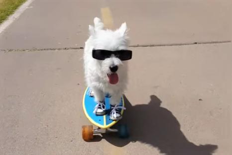 video of dogs enjoying sports