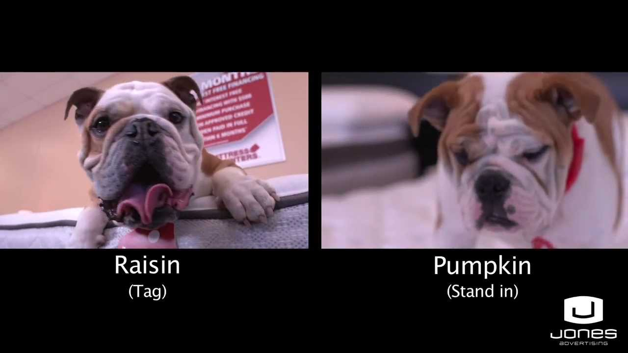 video of behind the scene footage of puppy commercial