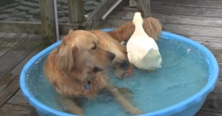 video dog and duck best friends