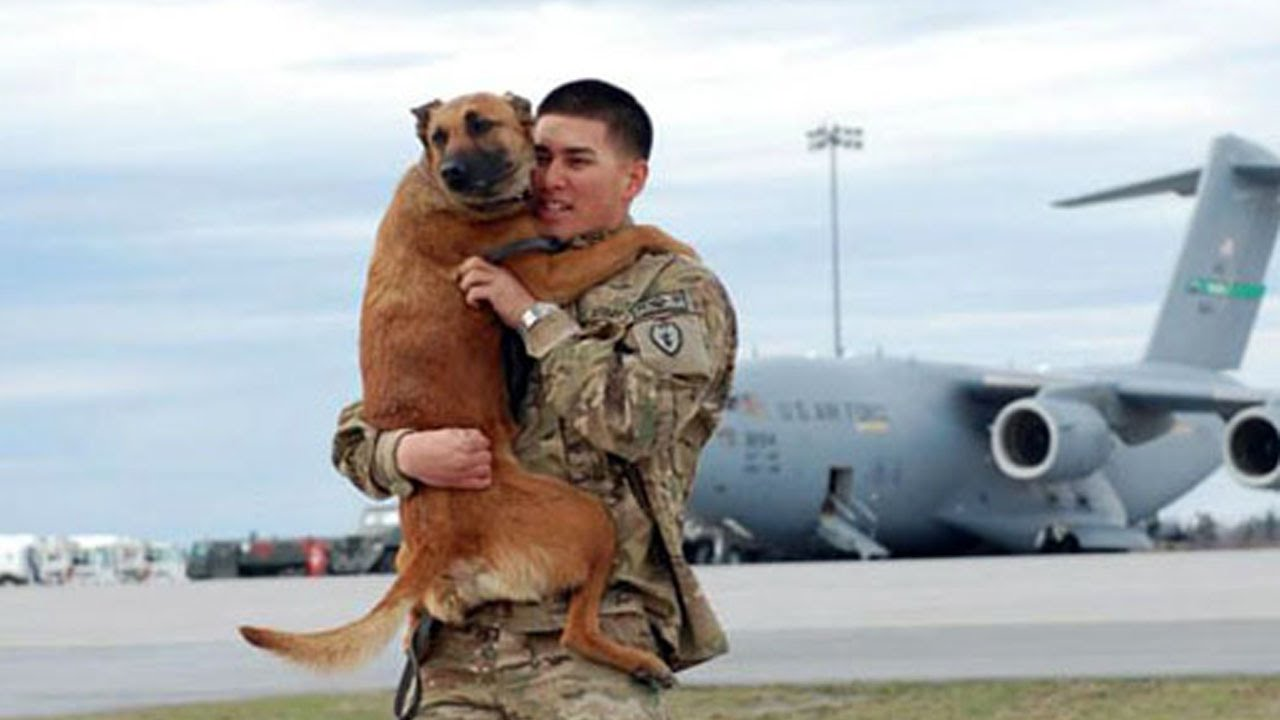 video dogs welcoming back soldiers