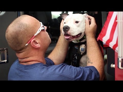 video rescue dog became honorary fireman