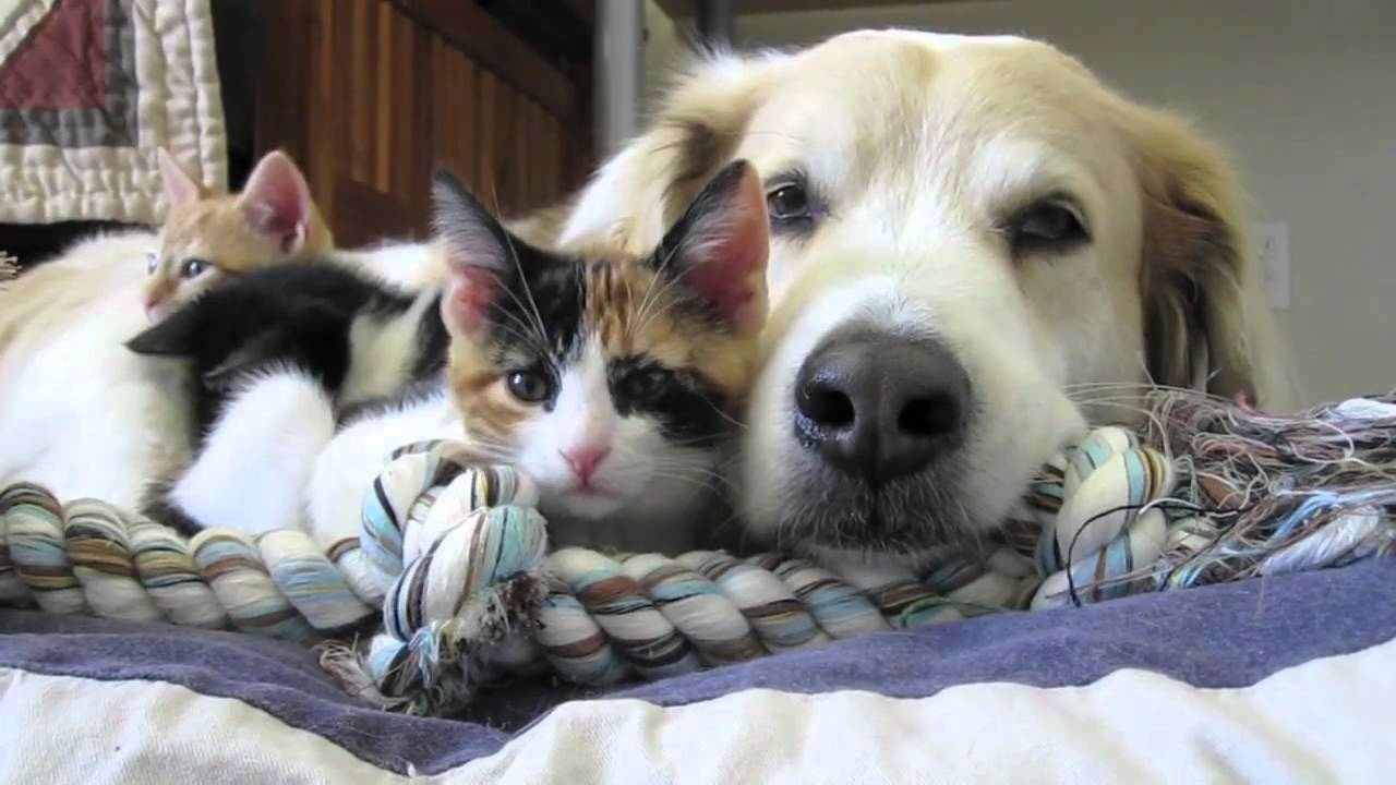 Murkin the rescue dog and his kitten friends video