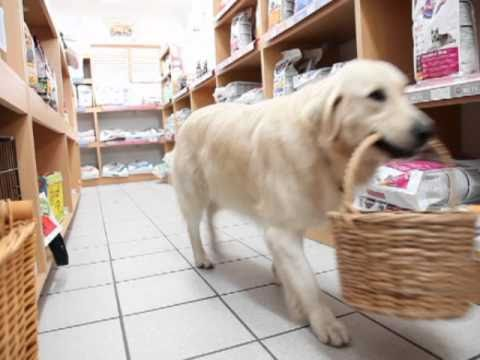 video Retriever goes shopping by herself