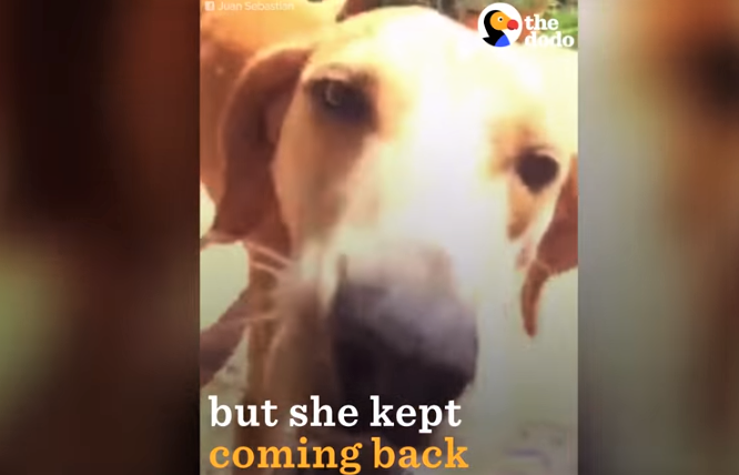 video stray dog adopts a family