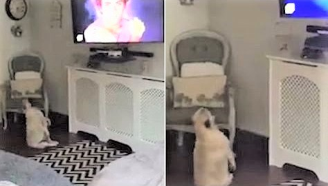 video Dog dancing to favorite song