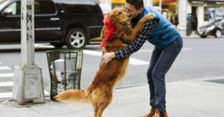 video of a Golden Retriever who loves to hug strangers in NYC