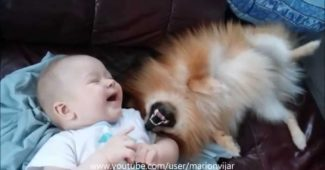 video of a Pomeranian making a baby laugh