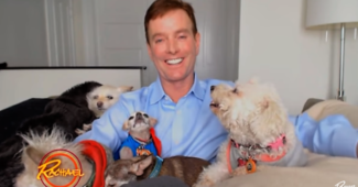 video of a man who adopts 10 senior dogs