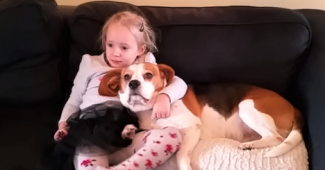 video beagle Charlie best friend with little girl