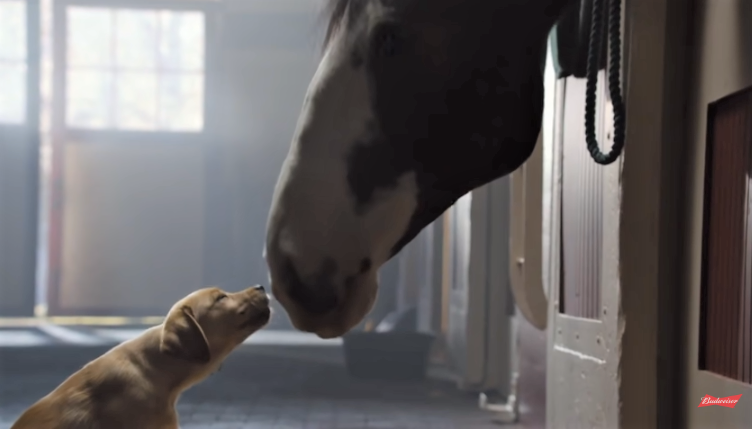 video Budweiser commercial puppy loves horse