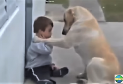 video mama dog reaches out to little boy with Downs Syndrome